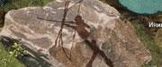 Стань доисторическим охотником в Мезолите